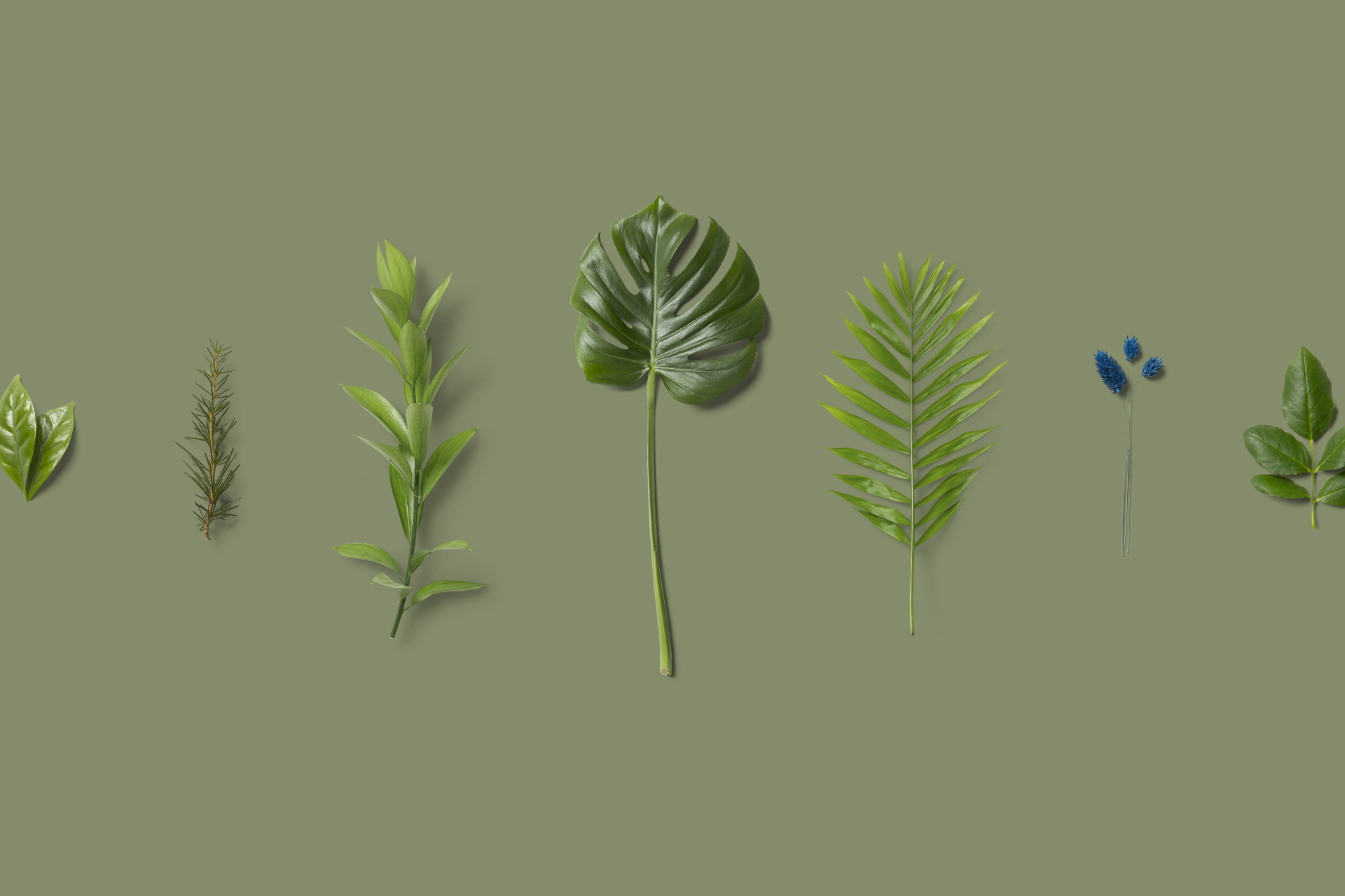 How we developed software to solve the problem of counting growing plants